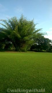Lovely greenery