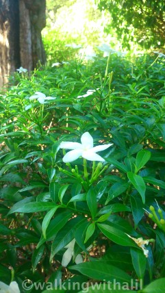 Herb garden at Botanic Gardens