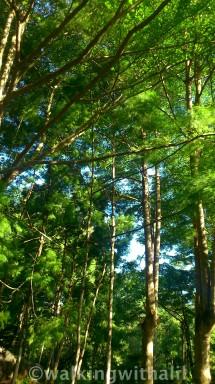 Standing tall at botanic gardens
