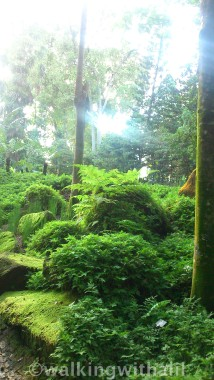 Lord of the Rings at Botanic Gardens