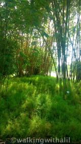 Bamboo delights at Botanic Gardens