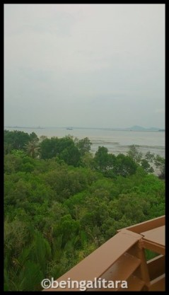 View from the top of the treehouse at Pulau Ubin