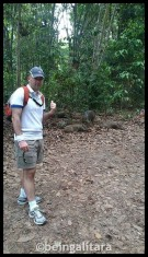 Wild Boar sighting at Pulau Ubin