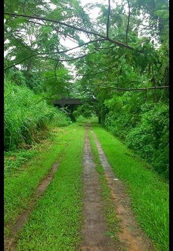 Green loving inSingapore