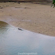 Our highlight has to be spotting the komodo lizard waddling into the water while a nearby egret watches on cautiously.