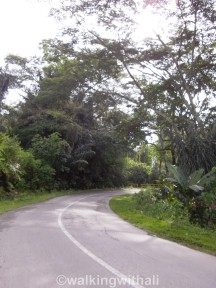 The main road to Tomok. You'll see lots of large vehicles coming down this way so do watch out.